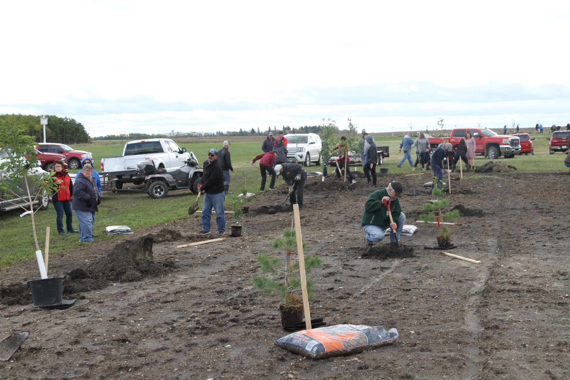 A small army of volunteers showed up to help Mullett's Home Hardware plant trees along the west side of the Southeast Integrated Care Centre on Friday, September 27, 2019. Home Hardware along with Tree Canada has a tree planting program, and plants trees around Canada every year.