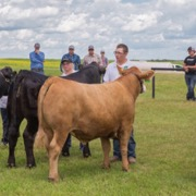 The 126th Fairmede Ag Society Fair was held on Saturday, June 30, and included the Fairmede 4H Beef Club's 84th Achievement Day, as well as a horse show.