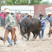 The Moosomin Ranch Rodeo was held on Saturday, July 20, and included trailer loading, team sorting, doctoring, branding, and wild cow milking.