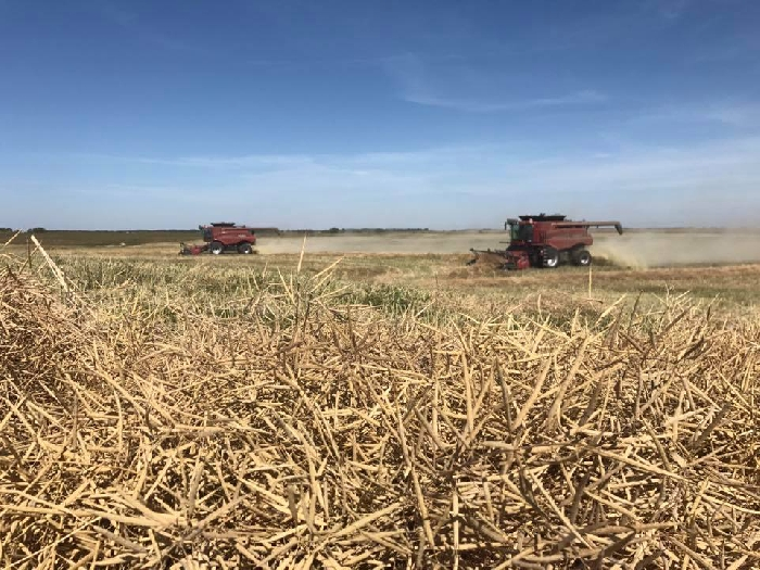 This photo of Gordon Doane & Yolanda Claassens taking off canola at Doane Grain Farms was submitted as part of our Harvest Photo Contest