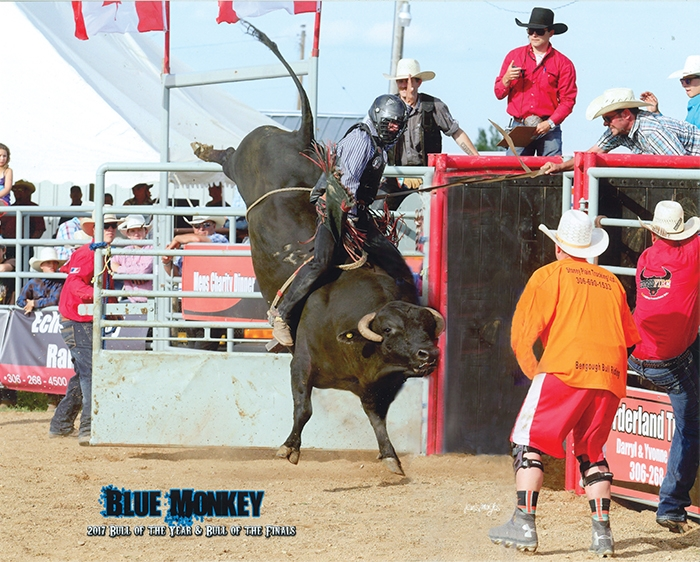 Blue Monkey, raised and trained by Bobby Stevens of Moosomin, won the CCA's Bull of the Year and Bull of the Finals in 2017.
