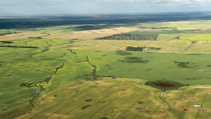 Kevin Weedmark took this photo of crops in Southeast Saskatchewan last spring. Farmers will soon be on the land again planting the 2020 crop.