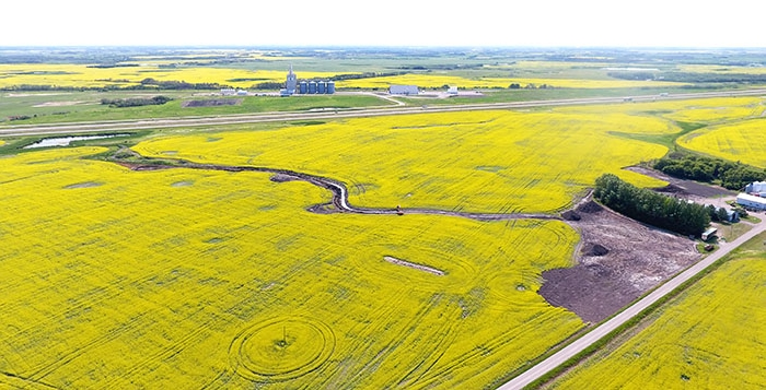 The P&H terminal just west of Moosomin, surrounded by fields of canola in full flower last week.