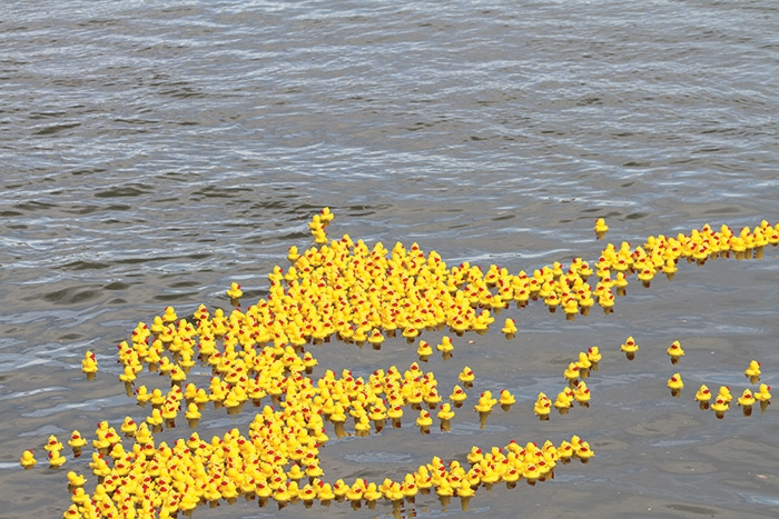 Ducks floating in the water