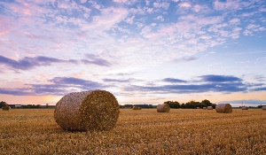 $100 for best harvest photo