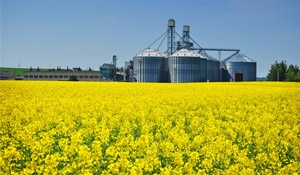 Shadow Agriculture Minister: Berthold says government must treat canola issue as a crisis