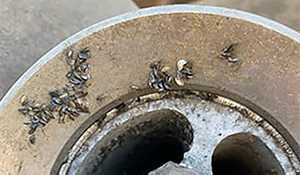 Zebra Mussels intercepted near Manitoba border