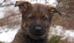 RCMP holding Name The Puppy contest